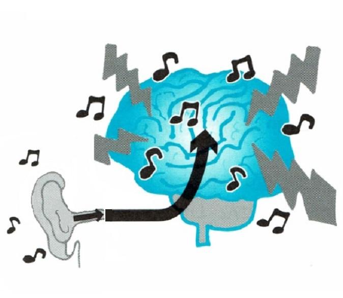 脳に音の刺激が入る画像