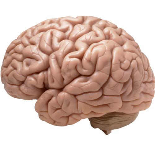 脳にダメージを受けた難聴