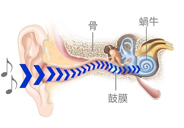 耳の中へ音が入ってくる経路